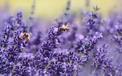 Een insectenvriendelijke tuin, maak er werk van!