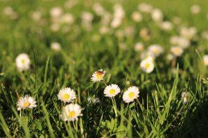 bloemen berm