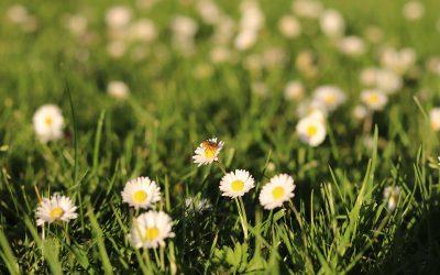 Bloemen in de berm: wat groeit er?