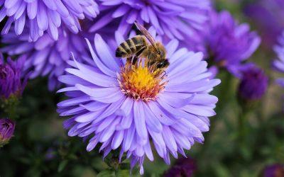Bijen als bestuivers: welke soorten bestuiving zijn er?